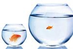 Сlipart Small Large Comparison Fish Too Small   BillionPhotos