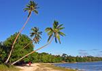 Сlipart Beach Tropical Climate Australia Palm Tree Island photo  BillionPhotos