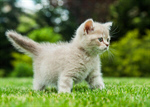 Сlipart Domestic Cat Kitten Pets Grass Cute photo  BillionPhotos