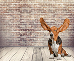Сlipart Dog Listening Animal Ear Humor Animal   BillionPhotos