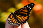 Сlipart Butterfly Child Trust Human Hand Nature photo  BillionPhotos