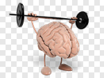 Сlipart Brain Strength Healthcare And Medicine Anatomy Gym 3d cut out BillionPhotos