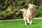 Сlipart dog walk hiking friend park photo  BillionPhotos