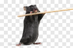 Сlipart Risk Mousetrap Mouse Humor Danger photo cut out BillionPhotos