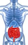 Сlipart Human Intestine Colon Stomach Anatomy Cancer 3d  BillionPhotos