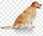 Сlipart dog big small two mammal photo cut out BillionPhotos