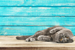 Сlipart cat cats kitty feline grey   BillionPhotos