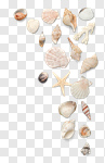 Сlipart Shell Beach Sand Starfish Frame photo cut out BillionPhotos
