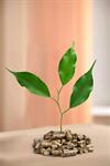 Сlipart biomass pellets wood plant photography fuel   BillionPhotos