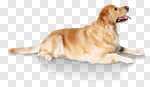 Сlipart dog big small two mammal photo cut out BillionPhotos