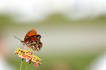 Сlipart Butterfly Monarch Butterfly Flower Insect Change photo  BillionPhotos