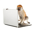 Сlipart Monkey Computer Laptop Animal Typing photo  BillionPhotos