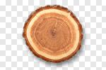 Сlipart Wood Tree Tree Ring Log Tree Trunk photo cut out BillionPhotos