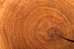 Сlipart Wood Tree Textured Wood Grain Tree Ring photo  BillionPhotos