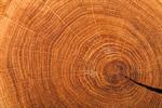 Сlipart Wood Tree Textured Wood Grain Tree Ring photo  BillionPhotos