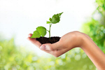 Сlipart Environment Growth Plant Human Hand Nature   BillionPhotos