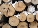 Сlipart Log Wood Firewood Timber Tree Ring photo  BillionPhotos