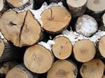 Сlipart Log Wood Firewood Timber Tree Ring photo  BillionPhotos