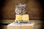 Сlipart Mousetrap Mouse Humor Danger Animal   BillionPhotos