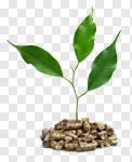 Сlipart biomass pellets wood plant photography photo cut out BillionPhotos