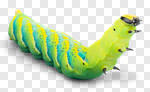 Сlipart Caterpillar Larva Green Moving Up Insect photo cut out BillionPhotos