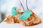 Сlipart sick cat pet care vet isolated   BillionPhotos