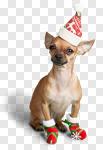 Сlipart Christmas Dog Humor Santa Hat Animal photo cut out BillionPhotos