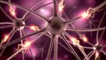 Сlipart Nerve Cell Brain Human Nervous System Cell Synapse 3d  BillionPhotos