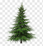 Сlipart Tree Christmas Tree Christmas Fir Tree Pine Tree 3d cut out BillionPhotos