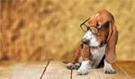 Сlipart dog in glasses Dog Glasses Humor Intelligence   BillionPhotos