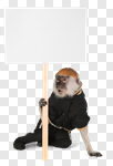 Сlipart Monkey Sign Holding Animal Protest photo cut out BillionPhotos