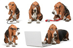 Сlipart hound basset hush animal pets   BillionPhotos