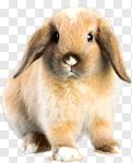 Сlipart Rabbit Animal Pets Cute Isolated photo cut out BillionPhotos