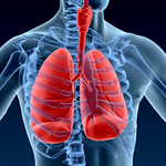 Сlipart Human Lung X-ray Pneumonia Anatomy Healthcare And Medicine 3d  BillionPhotos