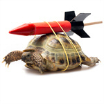 Сlipart Turtle Rocket Bizarre Efficiency Development photo  BillionPhotos