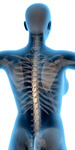 Сlipart Human Spine Back The Human Body Body Posture 3d  BillionPhotos