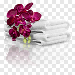 Сlipart Towel Spa Treatment Health Spa Isolated Orchid photo cut out BillionPhotos