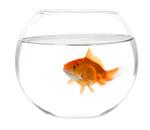 Сlipart Fishbowl Goldfish Fish Single Object Glass photo  BillionPhotos