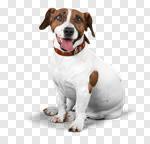 Сlipart dog labrador golden white cute photo cut out BillionPhotos