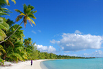 Сlipart Beach Tropical Climate Australia Palm Tree Island photo free BillionPhotos