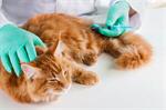 Сlipart veterinarian cat vet pet clinic   BillionPhotos