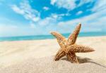 Сlipart beach starfish caribbean ocean concept   BillionPhotos
