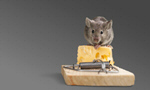 Сlipart Risk Mousetrap Mouse Humor Danger   BillionPhotos