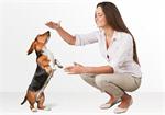 Сlipart dog listen talk ear animal   BillionPhotos