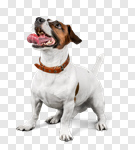 Сlipart dog listen talk ear animal photo cut out BillionPhotos