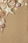 Сlipart Shell Sand Beach Starfish Sea photo  BillionPhotos