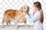 Сlipart Dog Golden Retriever Pets Playing Ball photo cut out BillionPhotos