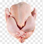 Сlipart Chicken Raw Full Length Freshness Isolated photo cut out BillionPhotos