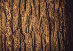 Сlipart Bark Tree Wood Textured Forest photo  BillionPhotos