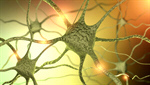 Сlipart Nerve Cell Human Nervous System Brain Cell Synapse 3d  BillionPhotos